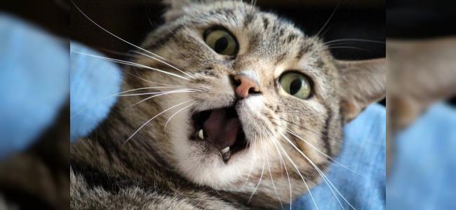 Kedilerde Ağız Kokusunu Önlemenin Yolları