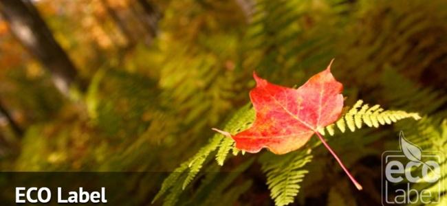 Ekolojik Dengeye Neden Önem Verilmelidir?