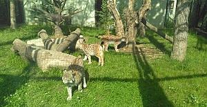 Samsun Hayvanat Bahçesi Ziyaretçi Akınına Uğruyor