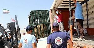 Suriye'deki Hayvanlar Geçici Süreliğine Türkiye'ye Getirildi